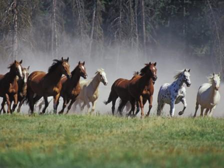 лошади бегущие